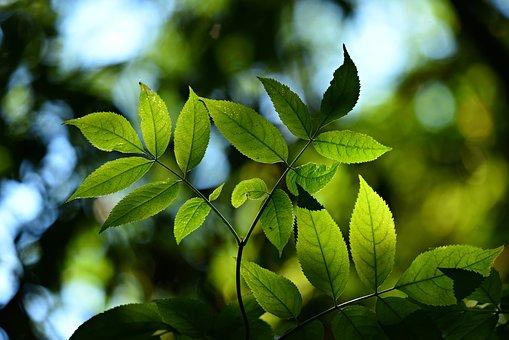 leaves-3616892__340